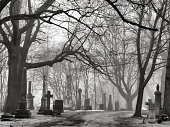 St. James Cemetery in the Fog, Toronto, Canada