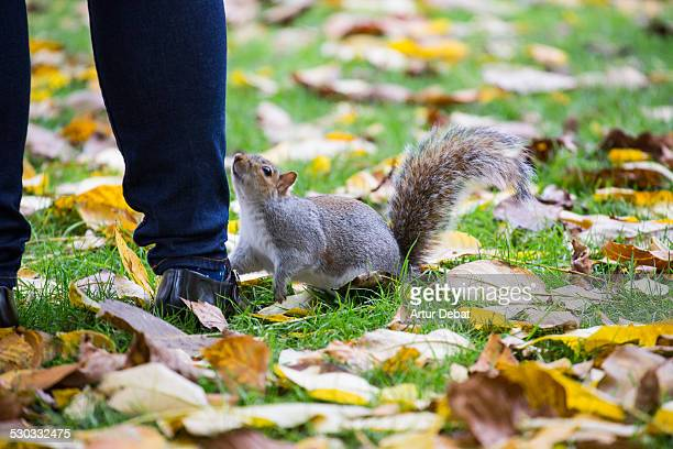 St James's Park squirrels playing with tourists.