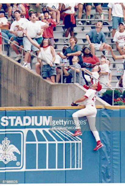 St Louis Cardinal left fielder John Mabry scales the wall going after a home run hit by San Fransico Giant Steve Scarsone in the eighth inning Giants...