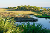 Palmettoes, salt marsh and creek on a barrier island of St. Marks Wildlife Refuge on the Gulf of Mexico.