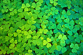 A texture of the clover plant leaves, a symbol for St. Patrick's Day.