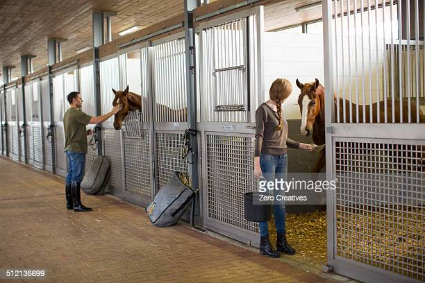 Stablehands feeding horses in stables