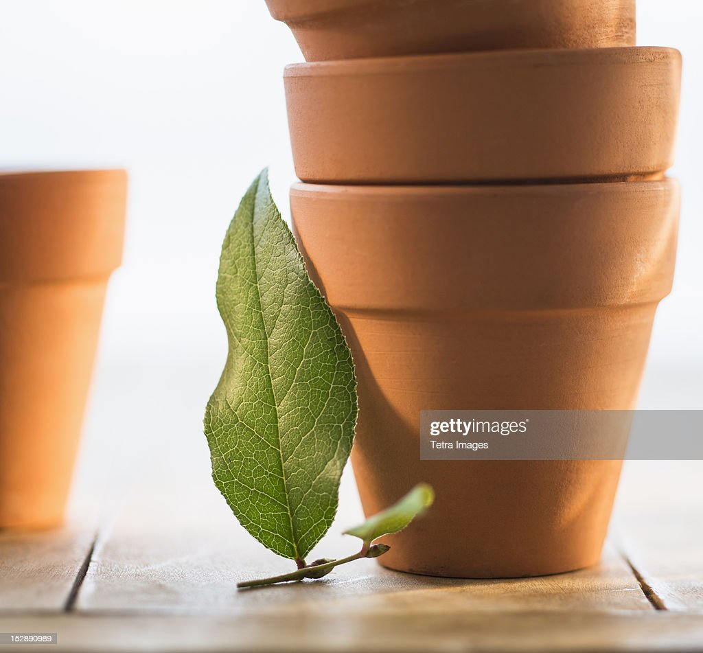 Stack of flower pots and green leaf : Stock Photo