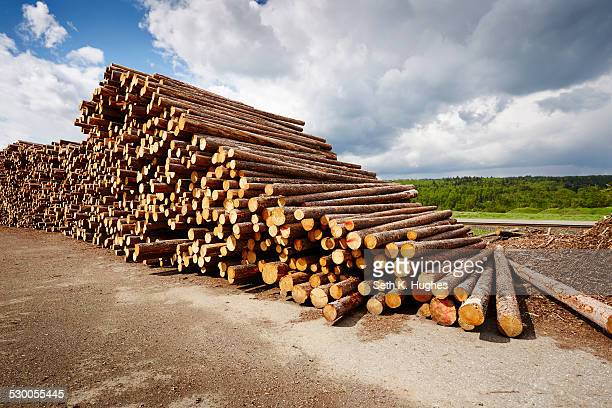 Stack of freshly logged timber in timber yard