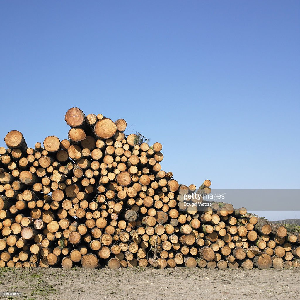Stack of logs against blue sky. : Stock Photo