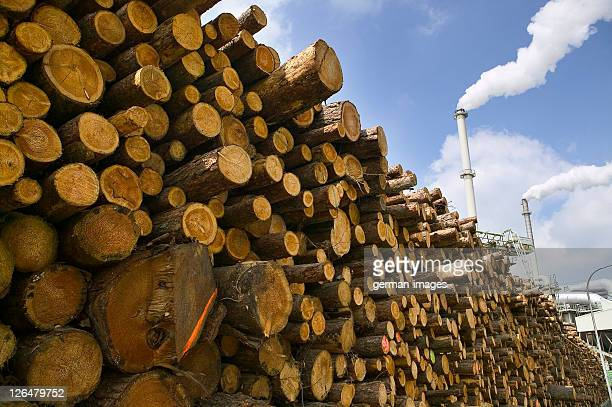 Stack of logs at timber industry