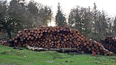 Stack Of Logs On Field Against Bare Trees