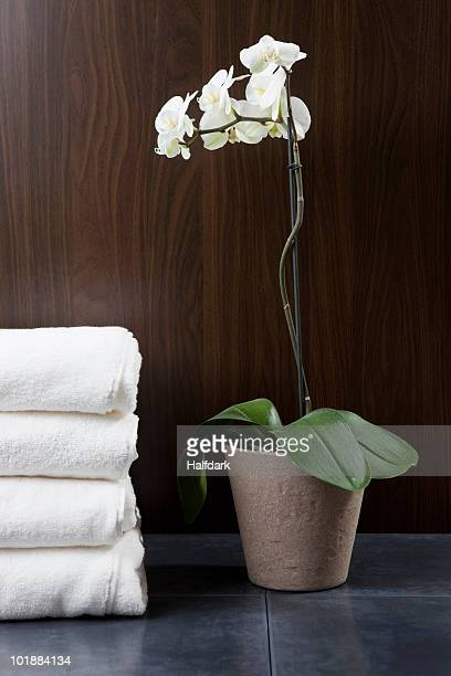 A stack of towels and potted white Moth Orchid