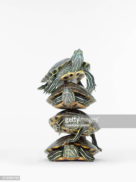 Stack or Turtles