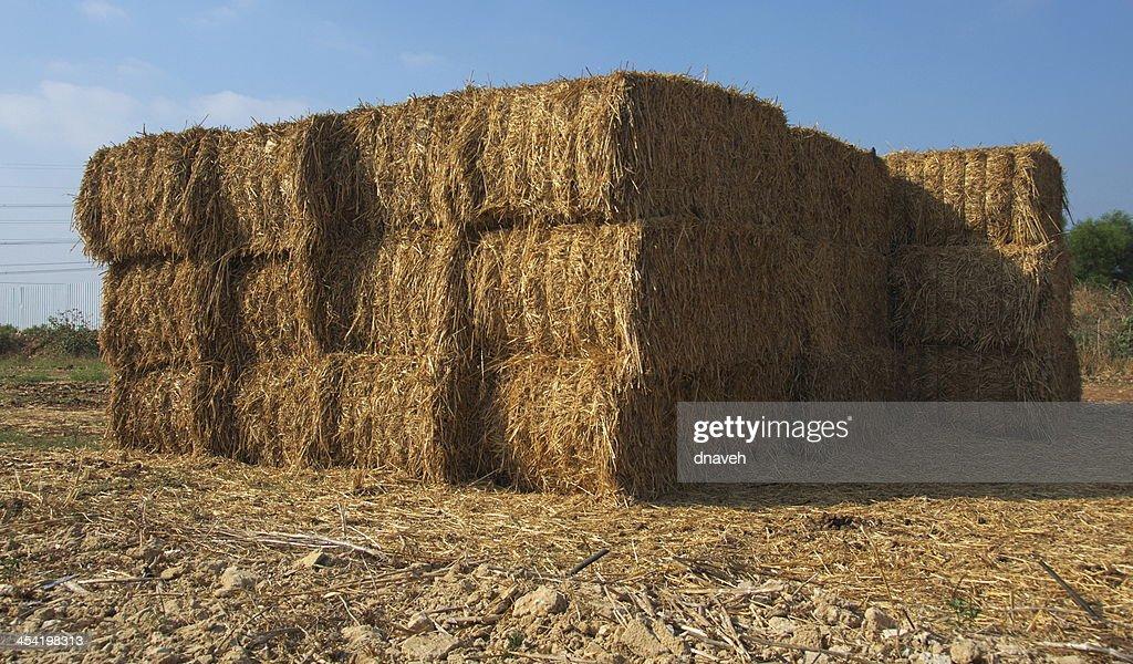 Stacked blocks of dry hay at a farm : Stock Photo