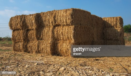 Stacked blocks of dry hay at a farm : Stock Photo