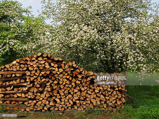 Stacked firewood and blossoming apple trees