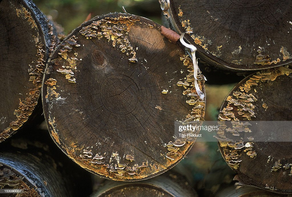 Stacked logs in forest, autumn, mushrooms : Stock Photo