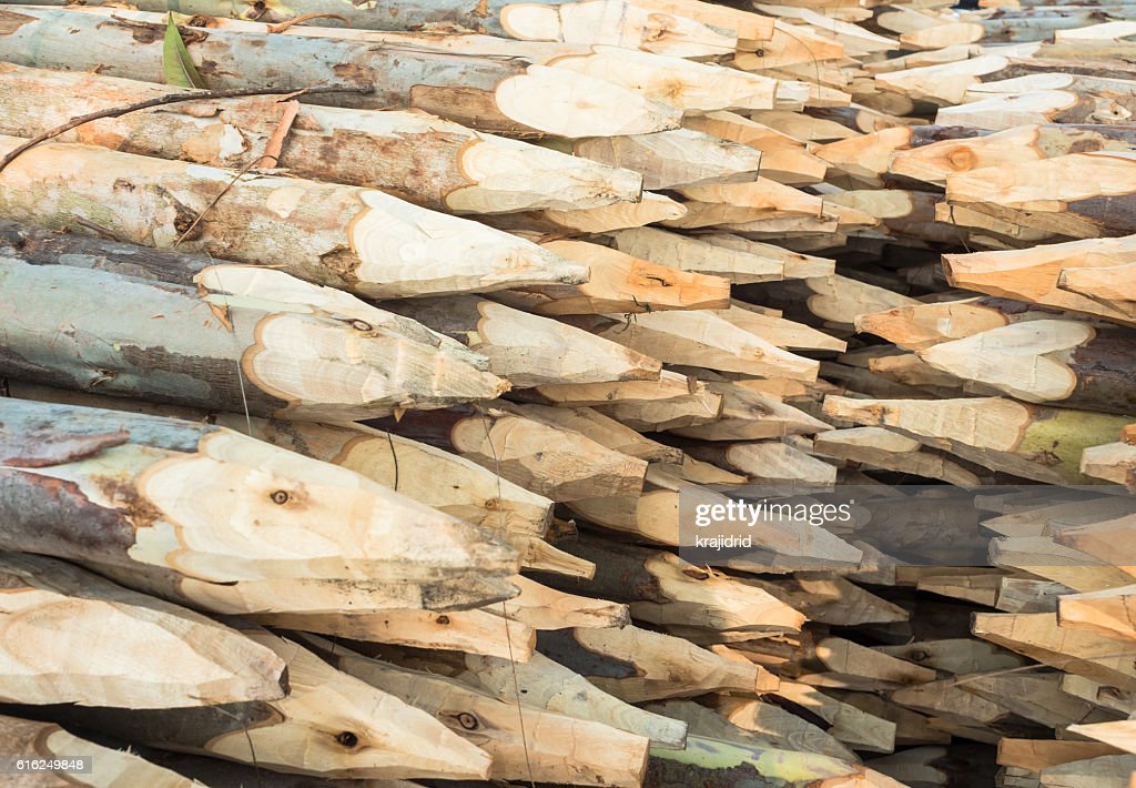 Stacked wood pine timber : Stock Photo