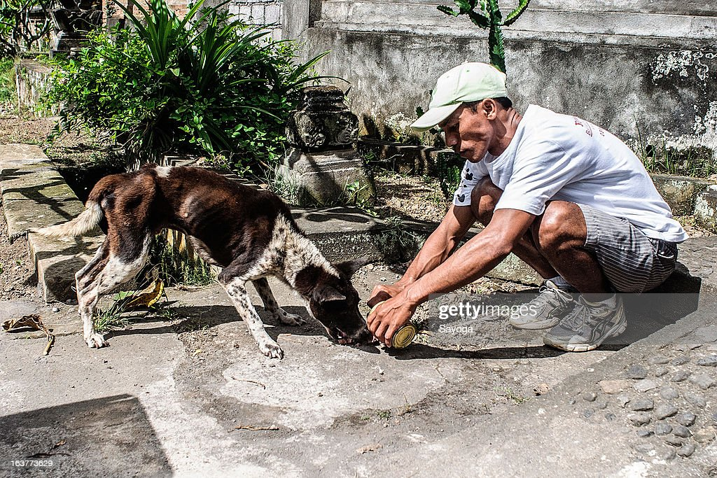 A staff member at Bali Animal Welfare Association (BAWA) feeds a stray dog during a street feeding program on March 15, 2013 in Ubud, Bali, Indonesia. According to data from the Bali Animal Welfare Association (BAWA), the dog population in Bali is approximately 600,000. Many are reported to suffer from malnourishment and poor health.
