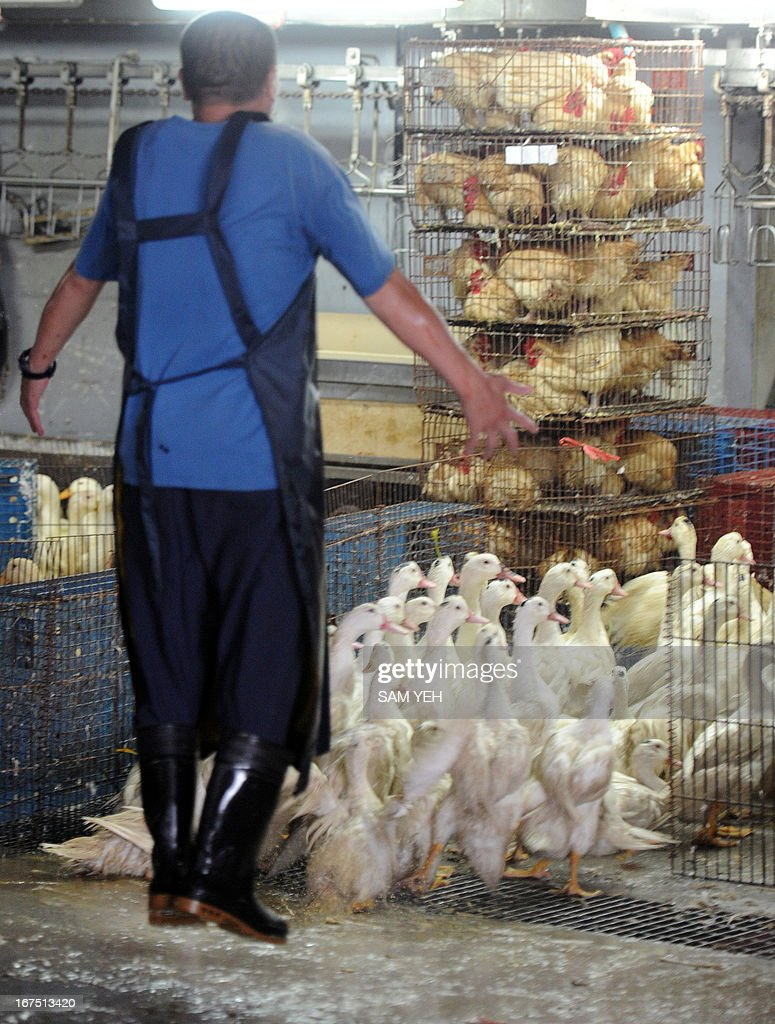 A staff member of a poultry market jumps to frighten ducks into a cage in Taipei on April 26, 2013. Asian countries on April 25 urged renewed vigilance against a spread of H7N9 bird flu after Taiwan reported a case of the deadly strain, the world's first outside mainland China. AFP PHOTO / Sam Yeh