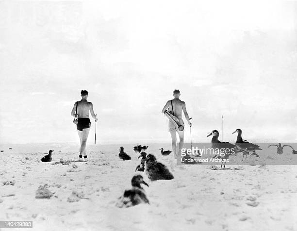 Staff members of the Pan American Airways base here have created a full size golf course in the island sands Midway Island Pacific Ocean October 15...