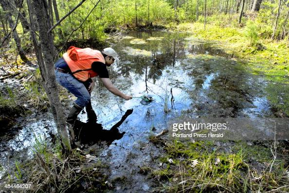 Staff photo by Doug Jones Thursday March 10 2007 Field biologist Doug Stewart scoops spotted Salamander eggs from a Vernal pool termed non...