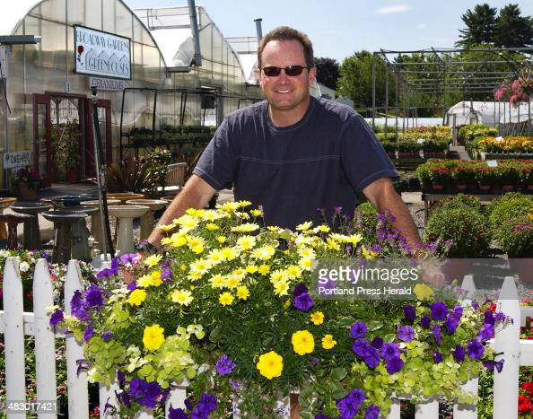 Argyranthemum Stock Photos And Pictures Getty Images