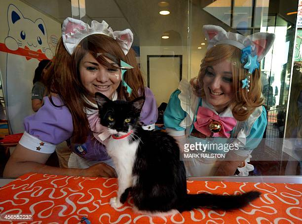 Staff play with cats during the kickstarter opening of the Catfe in Chinatown Los Angeles on October 2 2014 The cafe which allows patrons to interact...