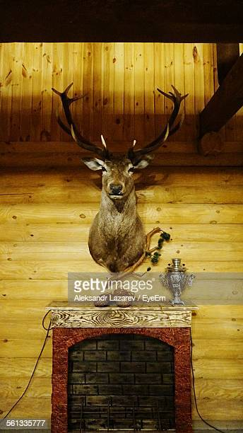 Stag Head Hanging On Wooden Wall