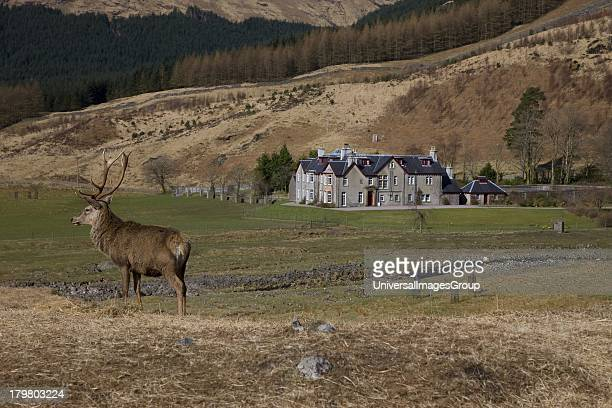 Stag in front of historic house in game hunting estate Glen Etive Argyll Scotland United Kingdom