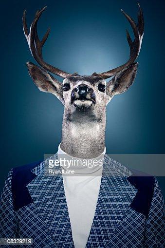 Stag Man Portrait : Stock Photo