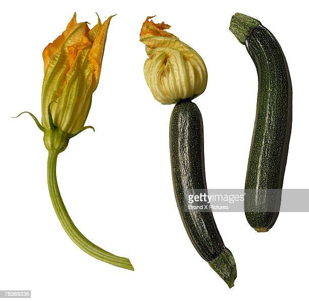 Stages of zucchini growth