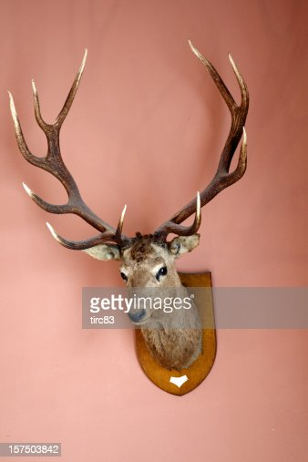 Stag's head mounted on a wall