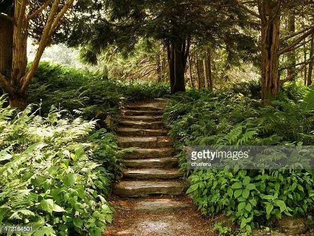 Stair in the Wood