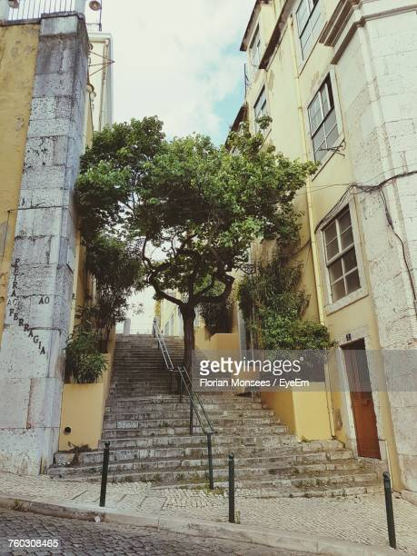 Staircase Amidst Trees In City Against Sky