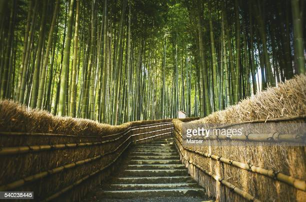 Staircase surrounded by bamboo grove