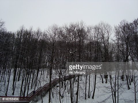 Stairs in the winter forest : Stock Photo