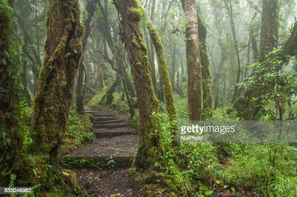 A stairway through a rain forest on the Barva Volcano in Braulio Carrillo National Park Costa Rica Photo taken 14 November 2011
