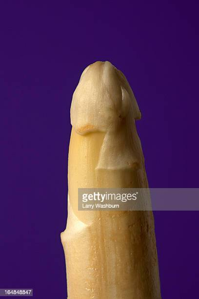 A stalk of white asparagus suggestive of a penis