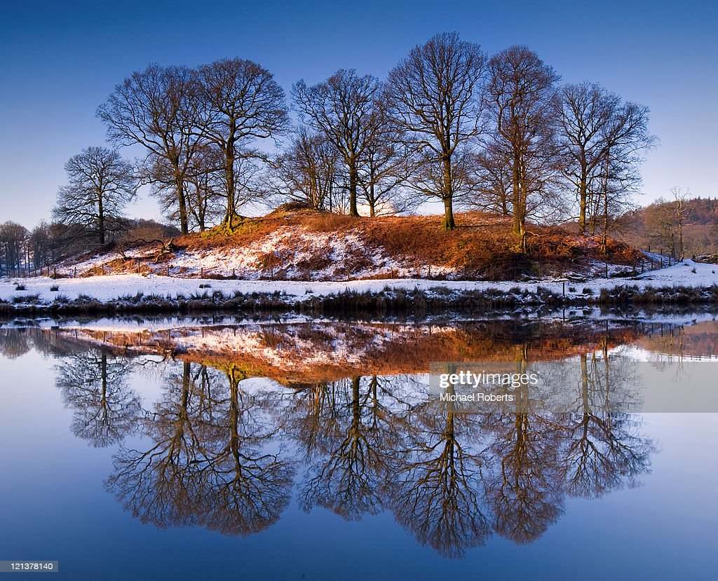 Stand of trees reflected in river