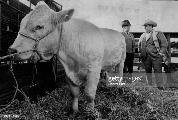 Standing behind one of Fred Mezey's Charolais bulls are Paul Bertshe left a breeder from Flanagan Ill Credit The Denver Post