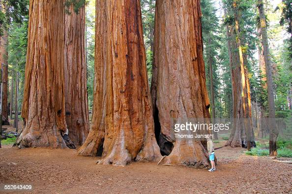 Standing in front of the giant sequoia trees Sequoia National Park California