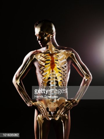 Standing male body with skeleton visible : Stock Photo