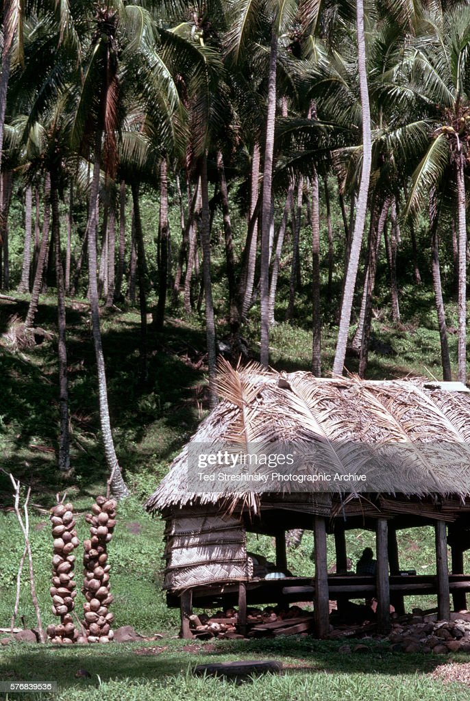 Stands holding coconuts drying in the sun rest outside a falle or hut on Upolu Island Western Samoa