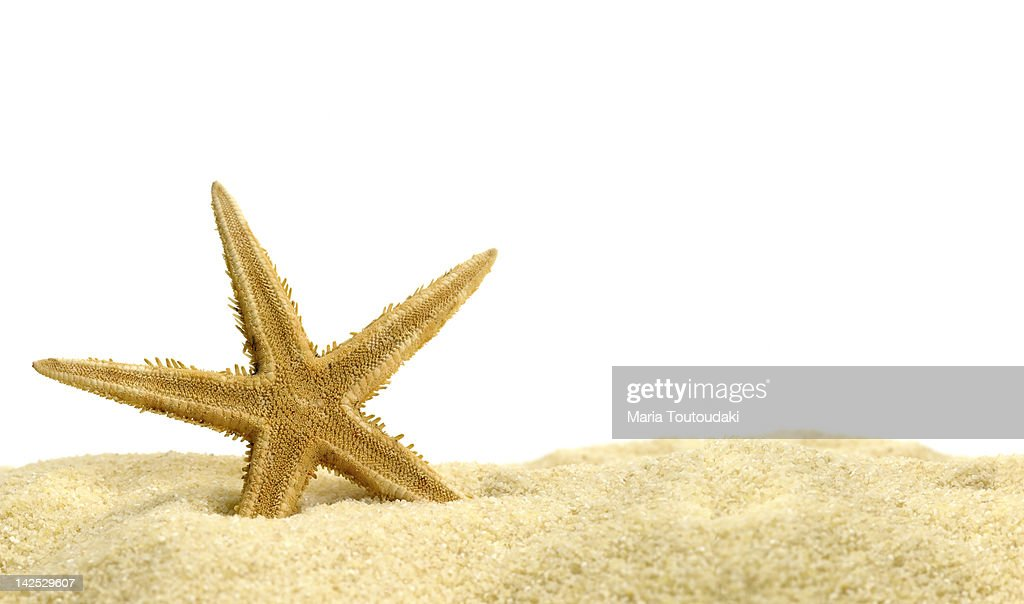 Star fish in the sand : Stock Photo