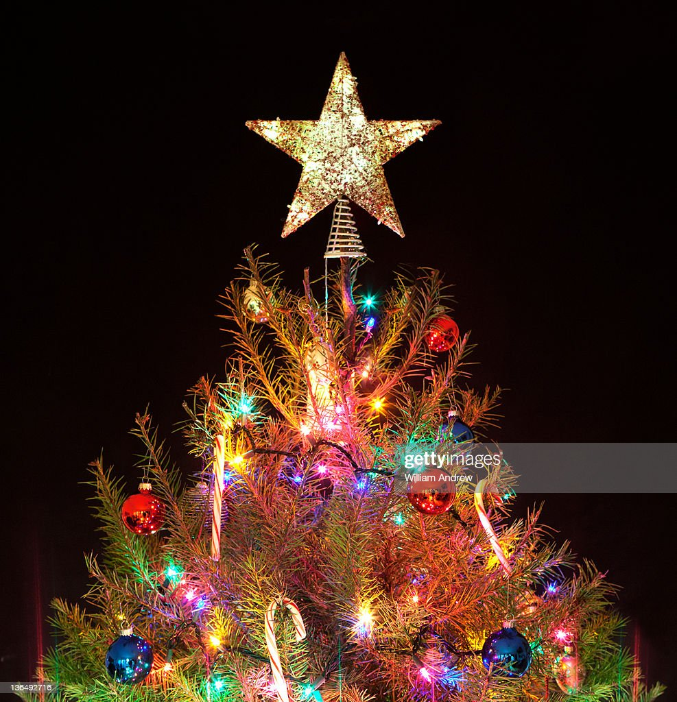 Star on top of Christmas tree : Stock Photo