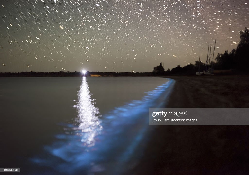 Star trails and bioluminescence in the Gippsland Lakes, Victoria, Australia.