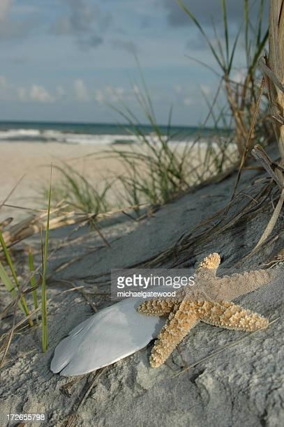 Starfish and Sanddollar
