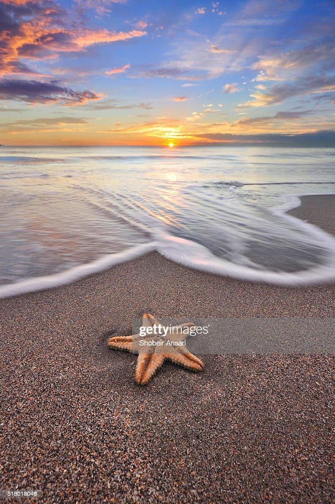 Starfish and the sunrise