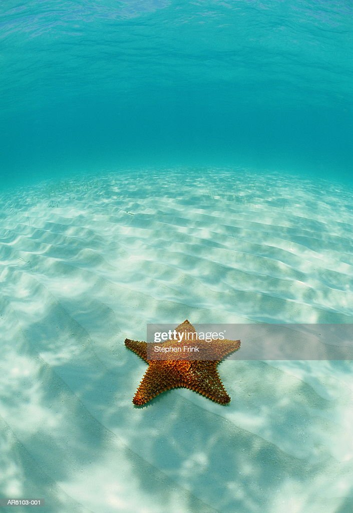 Starfish (Oreaster reticulatus) Atlantic Ocean, underwater view : Stock Photo