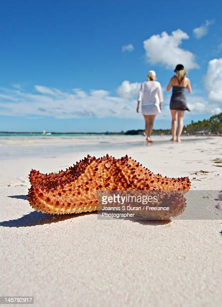 Starfish behind