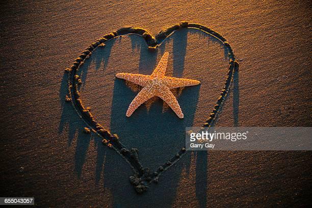 Starfish Inside Heart