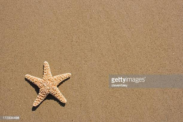 Starfish isolated on sandy beach