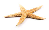 Yellow Starfish is isolated on white background.